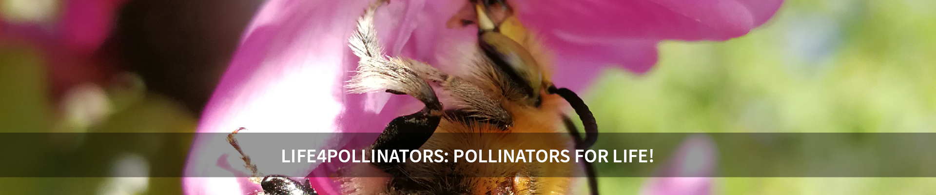LIFE4POLLINATORS: Pollinators for Life! -