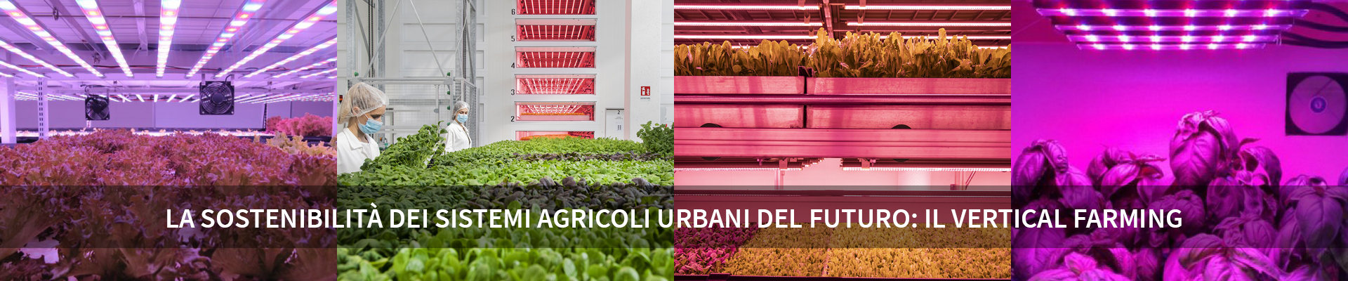 La sostenibilità dei sistemi agricoli urbani del futuro: il Vertical Farming -