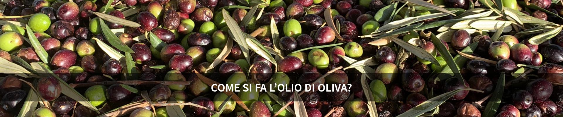 Scopri con noi come si produce l'olio di oliva ! -