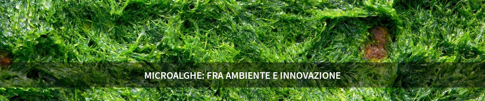 Microalghe: fra ambiente e innovazione -