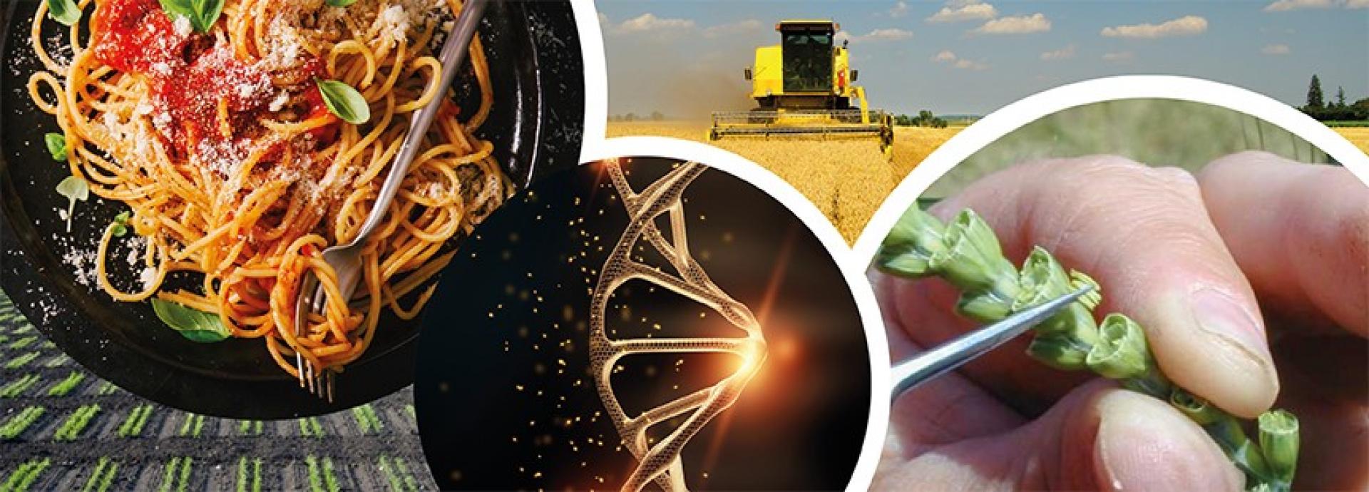CREA: Genetica, biotech, biodiversità e difesa green dei sistemi agricoli -